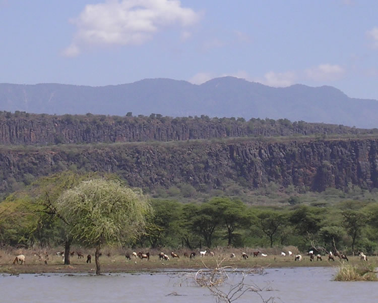 Baringo scarps: This image shows several fault scarps that are progressively farther away. Essentially we are looking at the edges of several horst blocks from within a graben that contains Lake Baringo. Image copyright Alex Guth