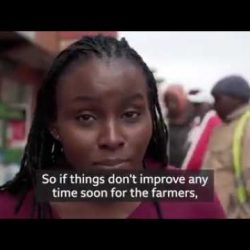 Why are tomato prices in Africa increasing?