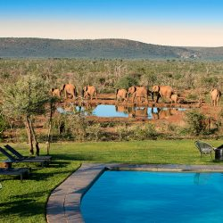 Madikwe Safari Lodge-Lelapa Lodge at the Lion Sands Game Reserve