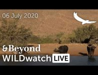 WILDwatch Live   06 July, 2020   Afternoon Safari   South Africa